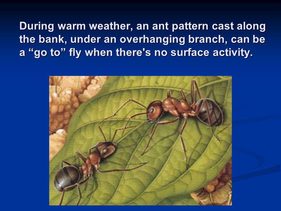 During warm weather, an ant pattern cast along the bank, under an overhanging branch, can be a go to fly when there s no surface activity.