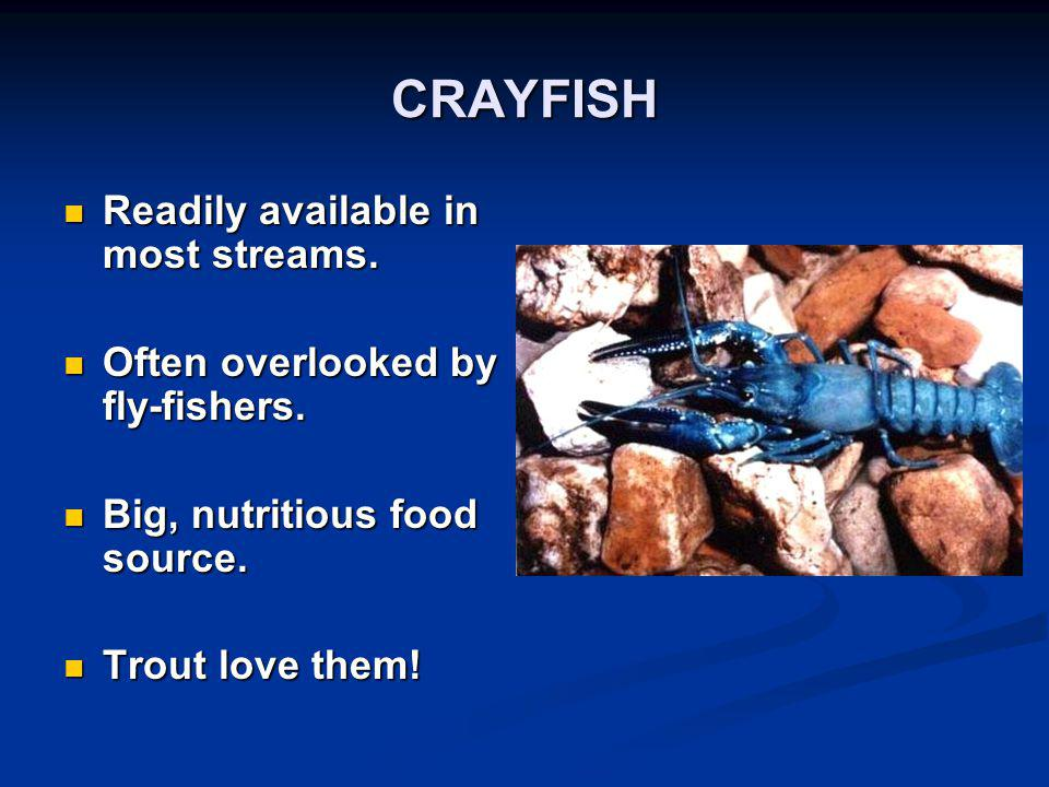 CRAYFISH Readily available in most streams.