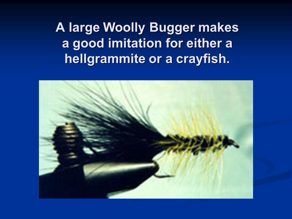 A large Woolly Bugger makes a good imitation for either a hellgrammite or a crayfish.