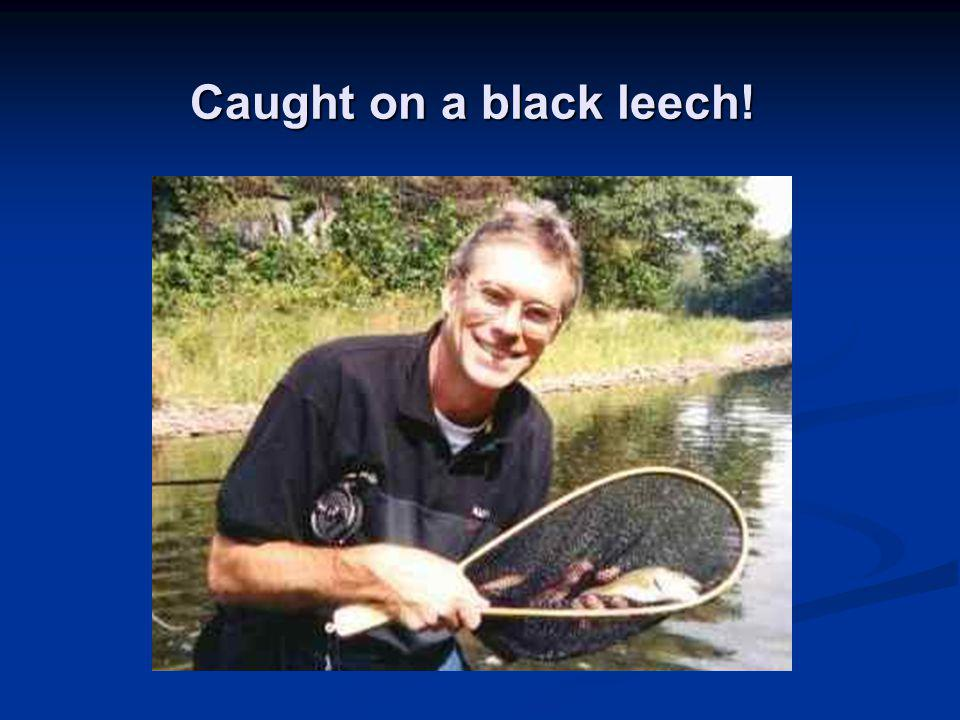 Caught on a black leech!