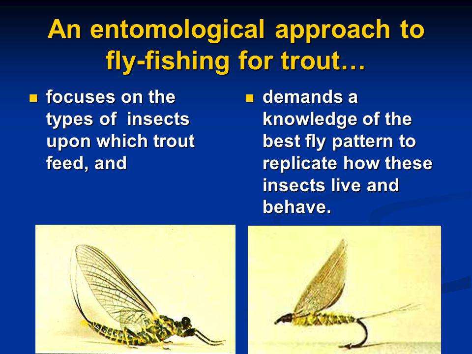 An entomological approach to fly-fishing for trout…