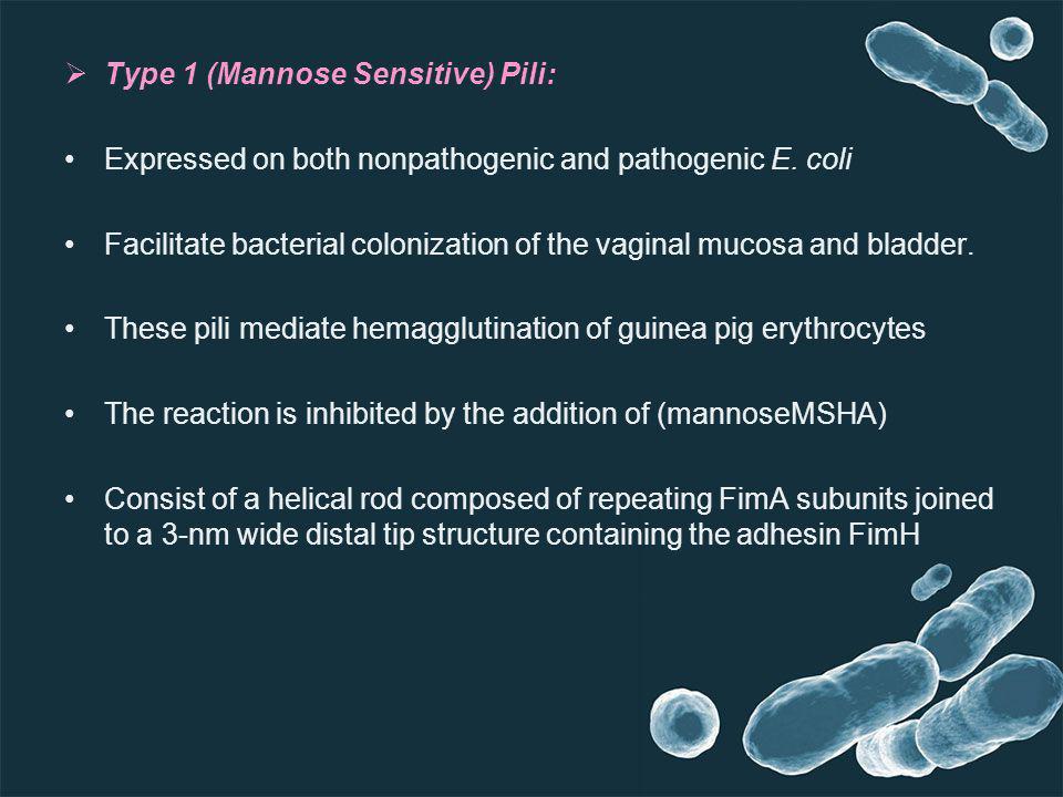 Type 1 (Mannose Sensitive) Pili: