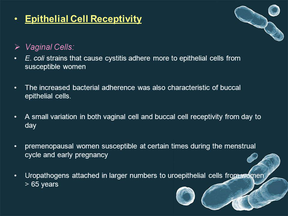 Epithelial Cell Receptivity