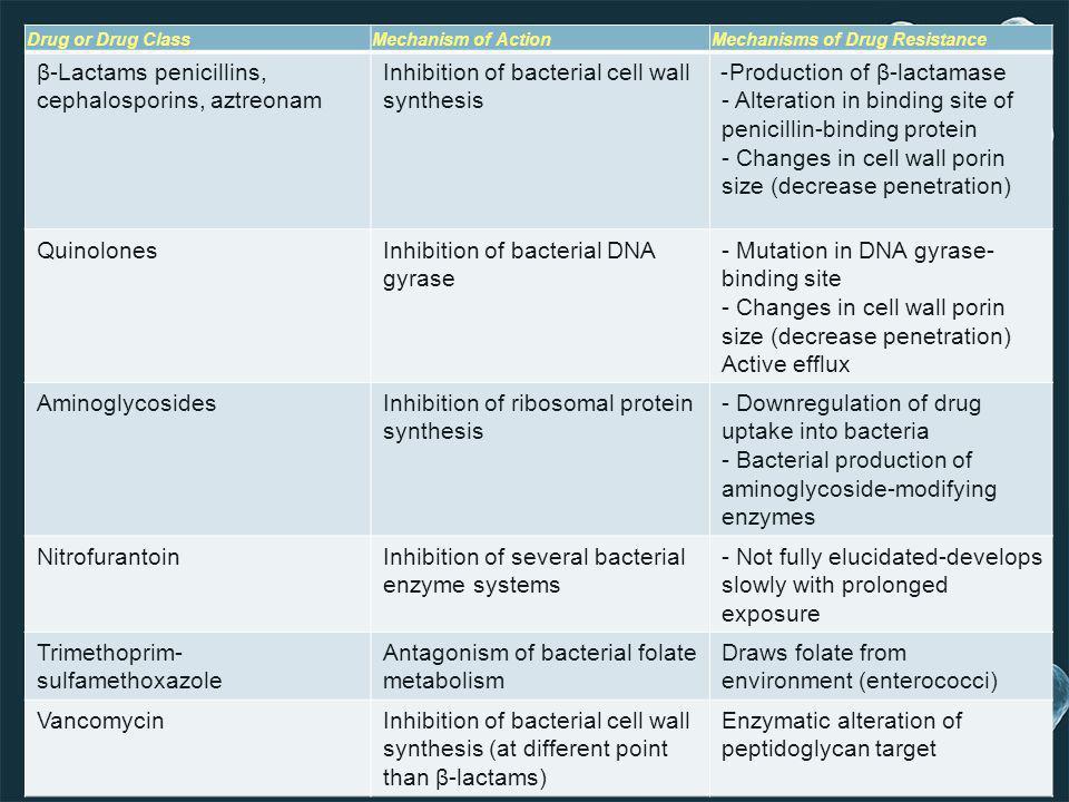 Production of β-lactamase-