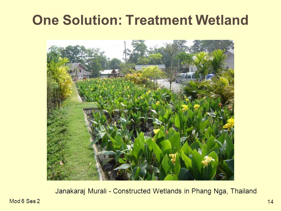 One Solution: Treatment Wetland