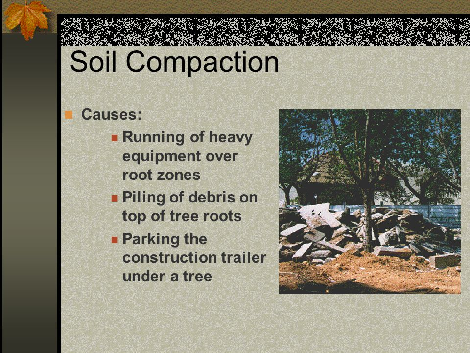 Soil Compaction Causes: Running of heavy equipment over root zones