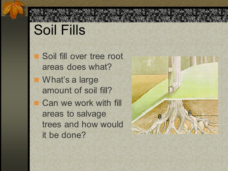 Soil Fills Soil fill over tree root areas does what
