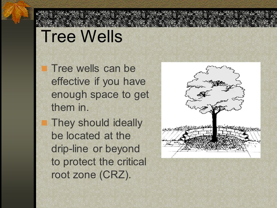 Tree Wells Tree wells can be effective if you have enough space to get them in.