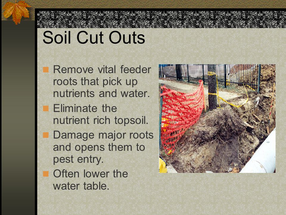 Soil Cut Outs Remove vital feeder roots that pick up nutrients and water. Eliminate the nutrient rich topsoil.