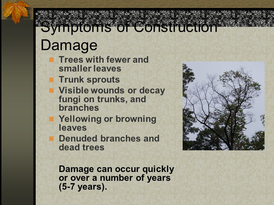 Symptoms of Construction Damage