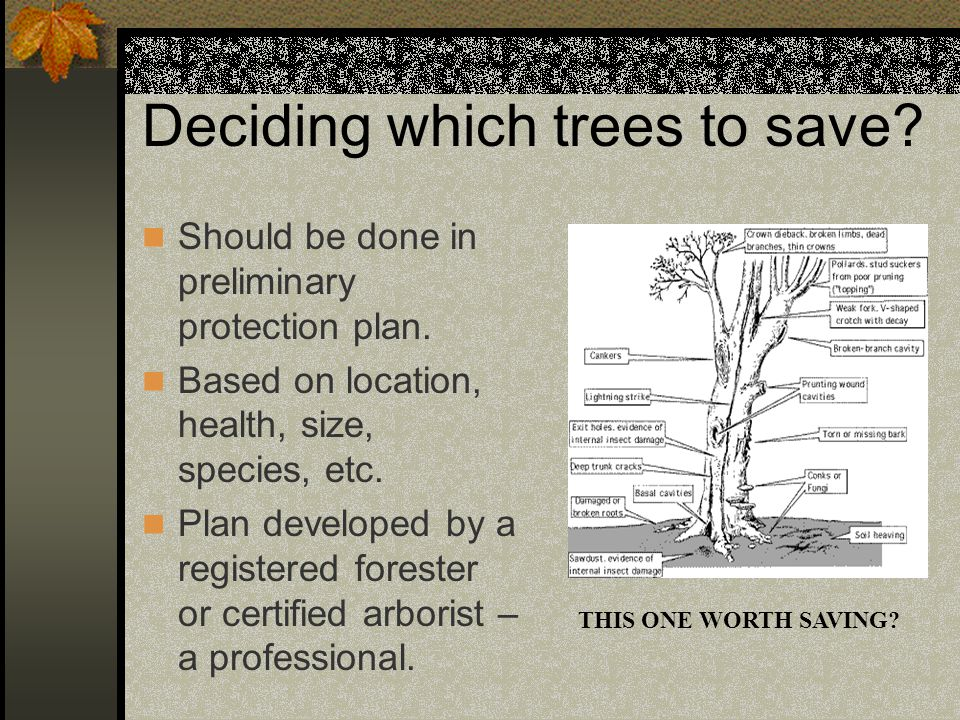 Deciding which trees to save