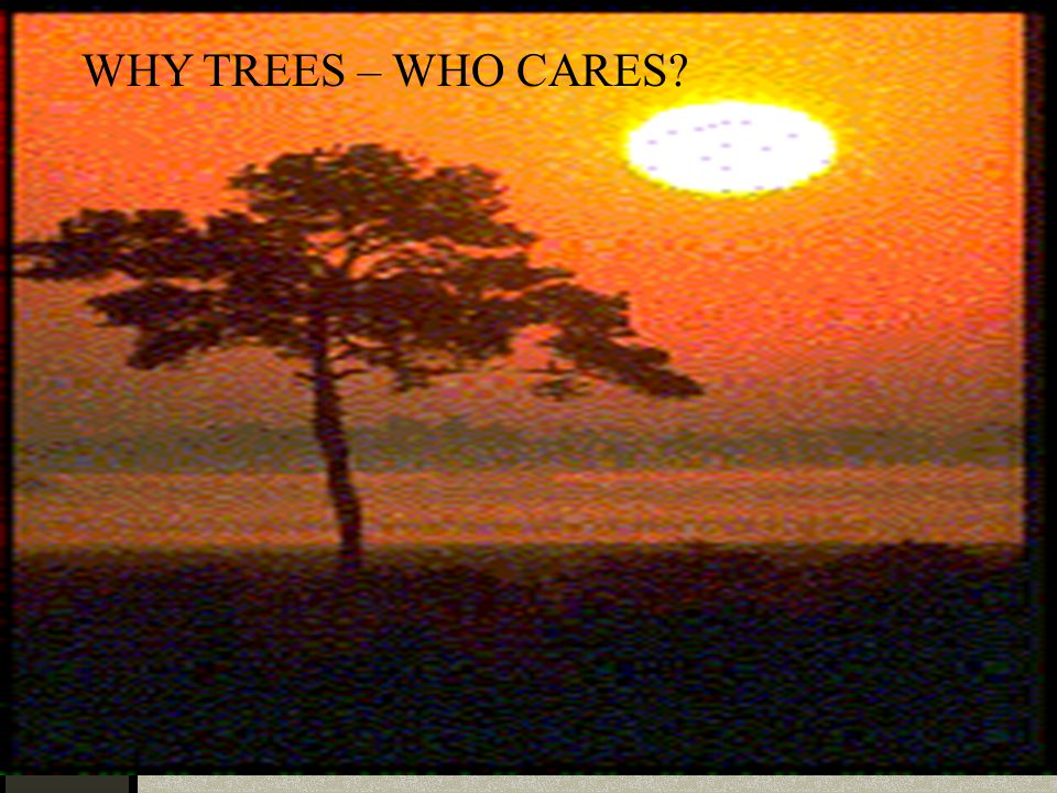 WHY TREES – WHO CARES