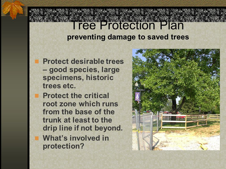 Tree Protection Plan preventing damage to saved trees