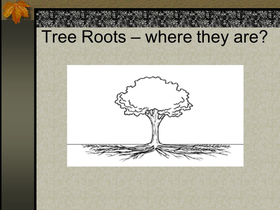 Tree Roots – where they are