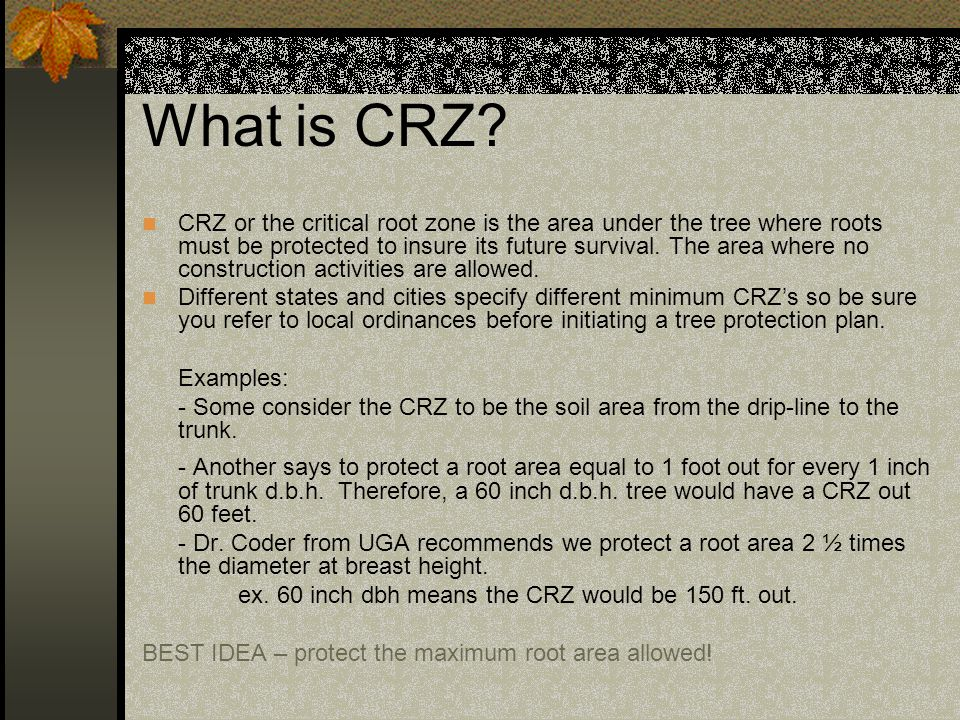 What is CRZ