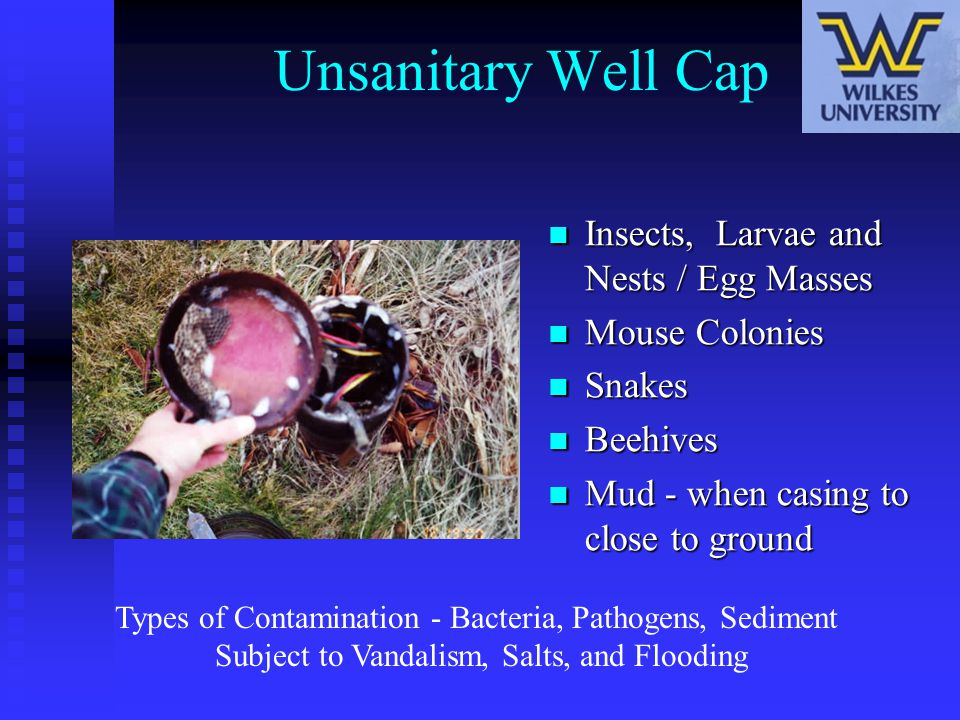 Unsanitary Well Cap Insects, Larvae and Nests / Egg Masses