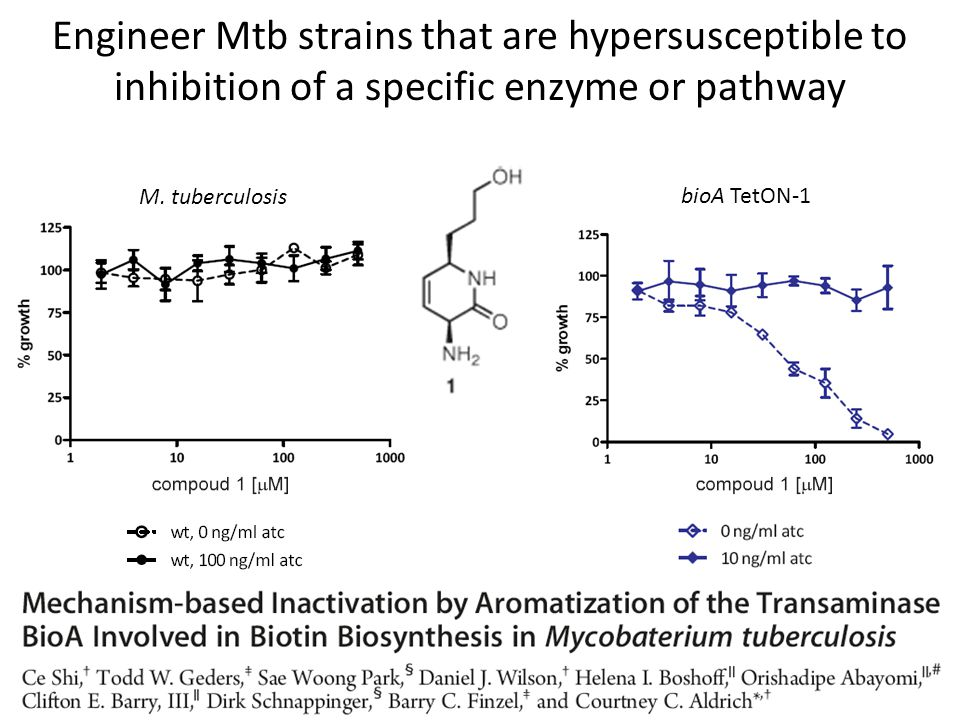 Engineer Mtb strains that are hypersusceptible to inhibition of a specific enzyme or pathway