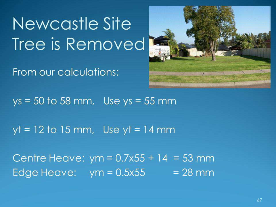 Newcastle Site Tree is Removed