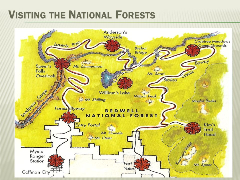 Visiting the National Forests