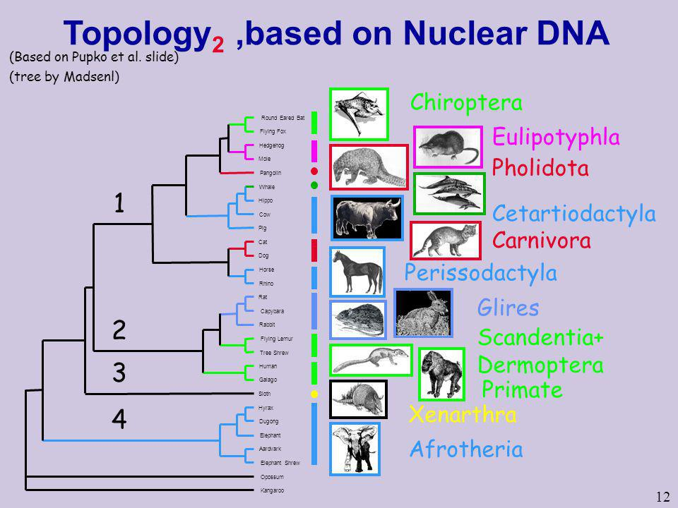 Topology2 ,based on Nuclear DNA