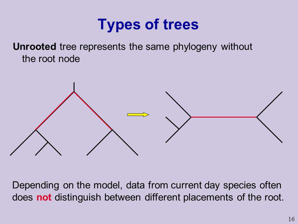 Types of trees Unrooted tree represents the same phylogeny without the root node.