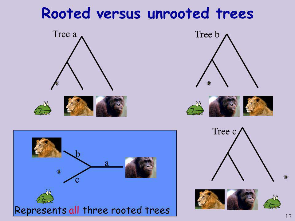 Rooted versus unrooted trees