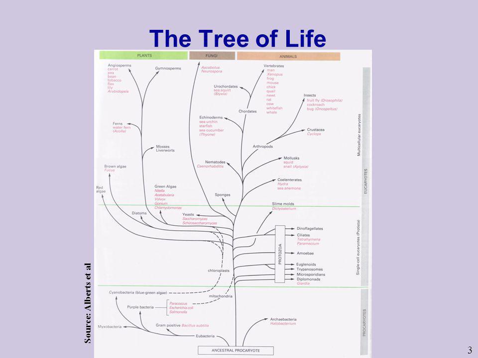 The Tree of Life Source: Alberts et al