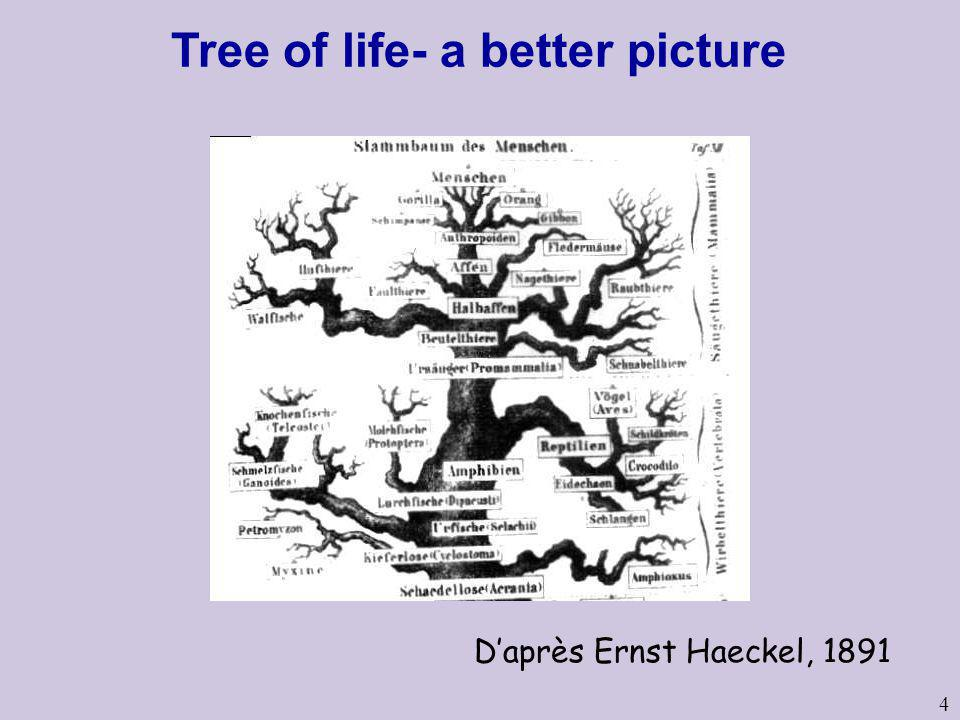 Tree of life- a better picture