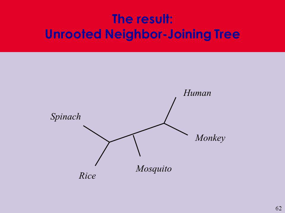 The result: Unrooted Neighbor-Joining Tree