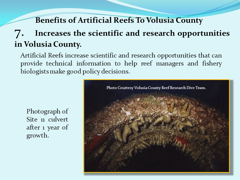 Benefits of Artificial Reefs To Volusia County