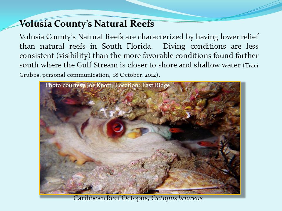 Volusia County's Natural Reefs