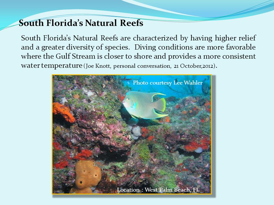 South Florida's Natural Reefs