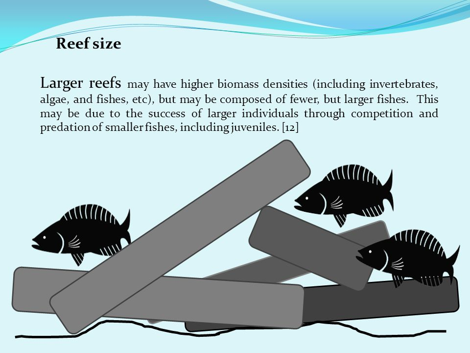 Reef size