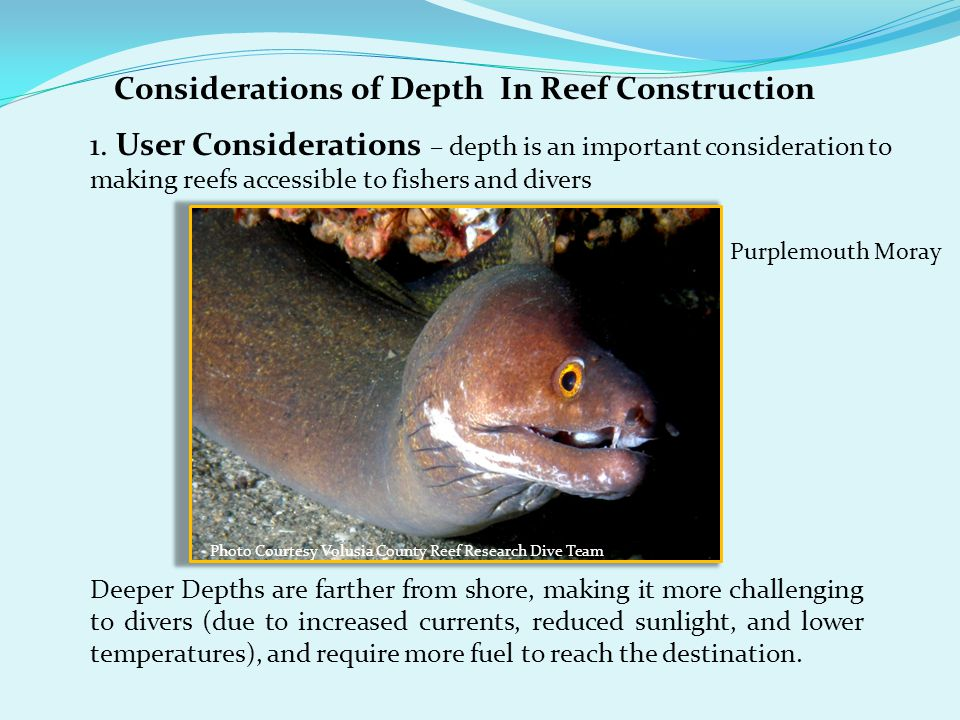 Considerations of Depth In Reef Construction