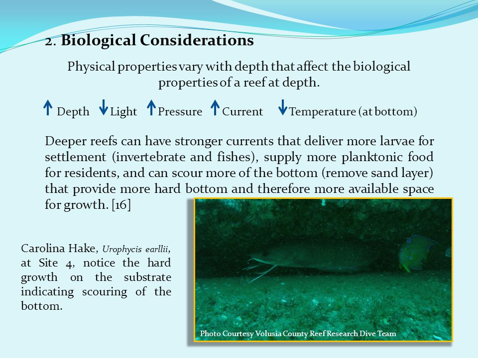 2. Biological Considerations