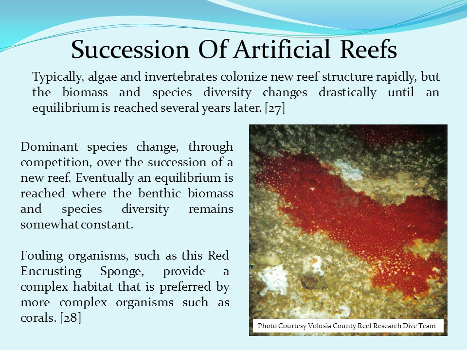 Succession Of Artificial Reefs