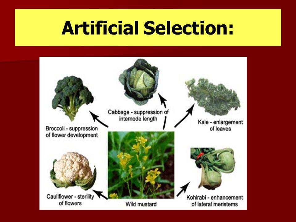 Artificial Selection:
