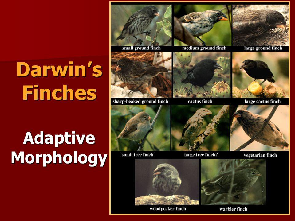 Darwin's Finches Adaptive Morphology