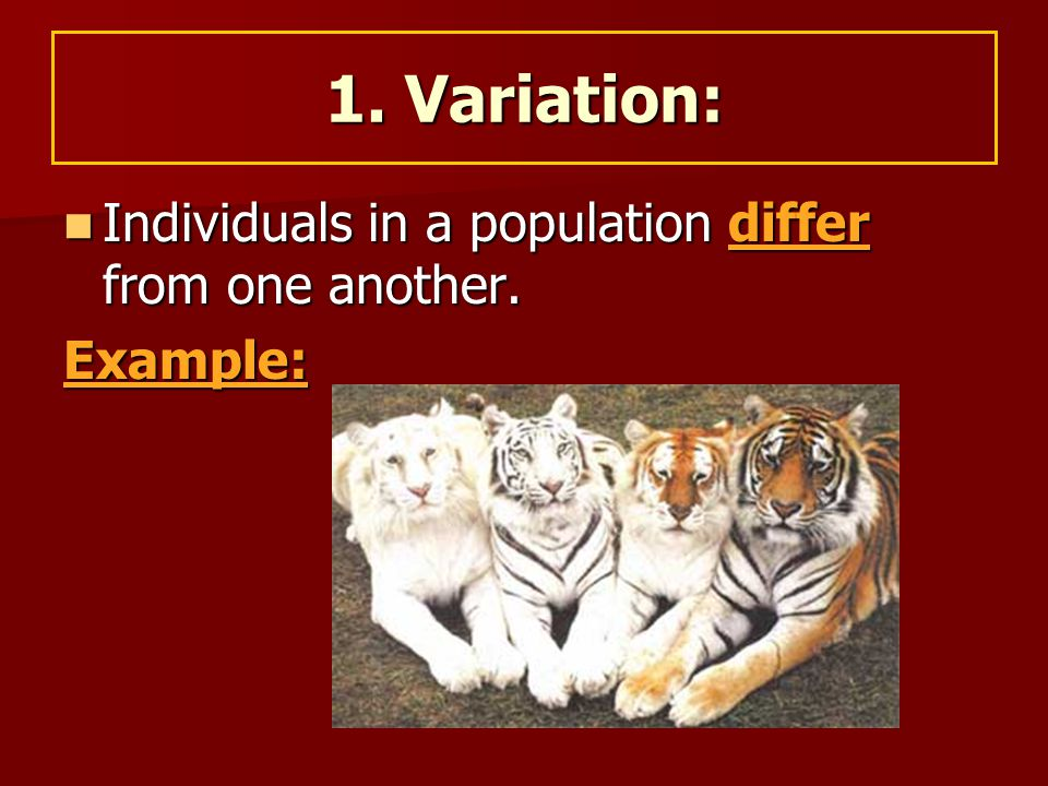 1. Variation: Individuals in a population differ from one another.