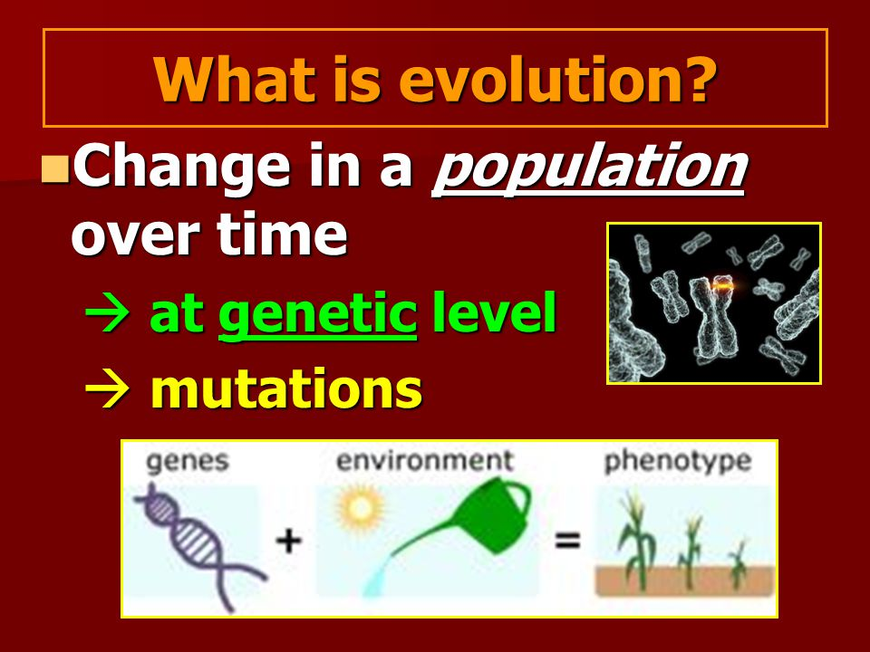 What is evolution Change in a population over time  at genetic level