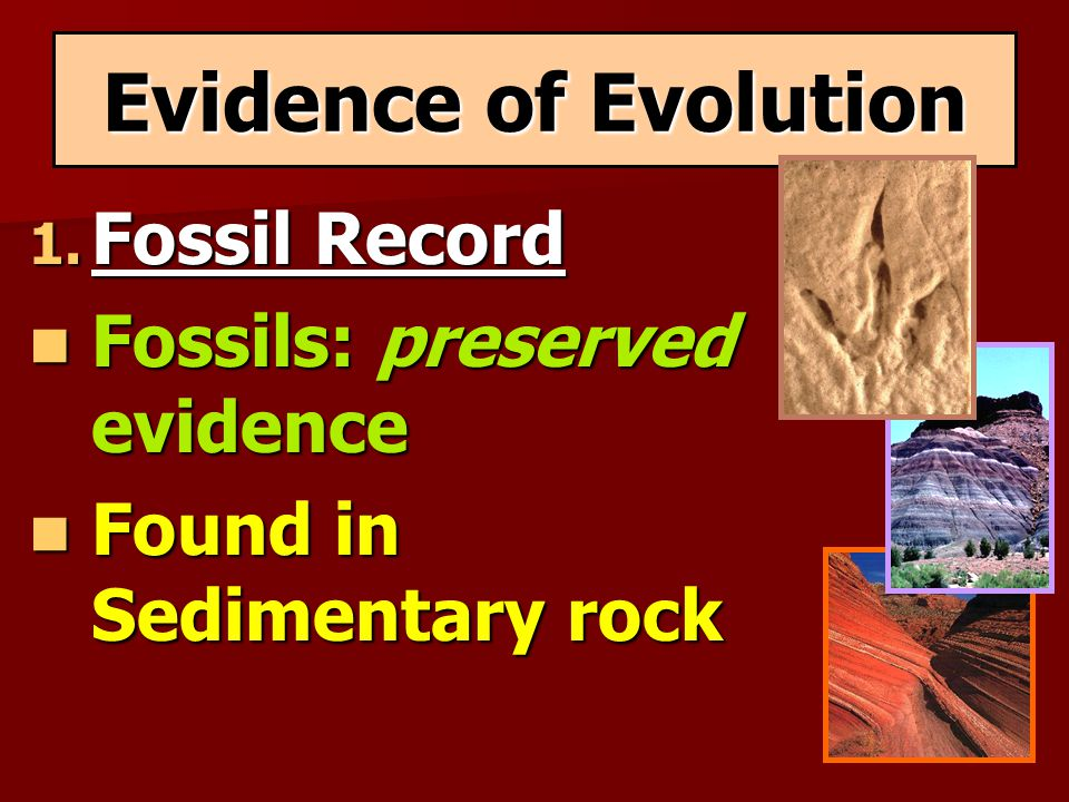 Evidence of Evolution Fossil Record Fossils: preserved evidence