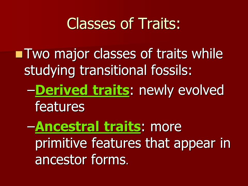 Classes of Traits: Two major classes of traits while studying transitional fossils: Derived traits: newly evolved features.
