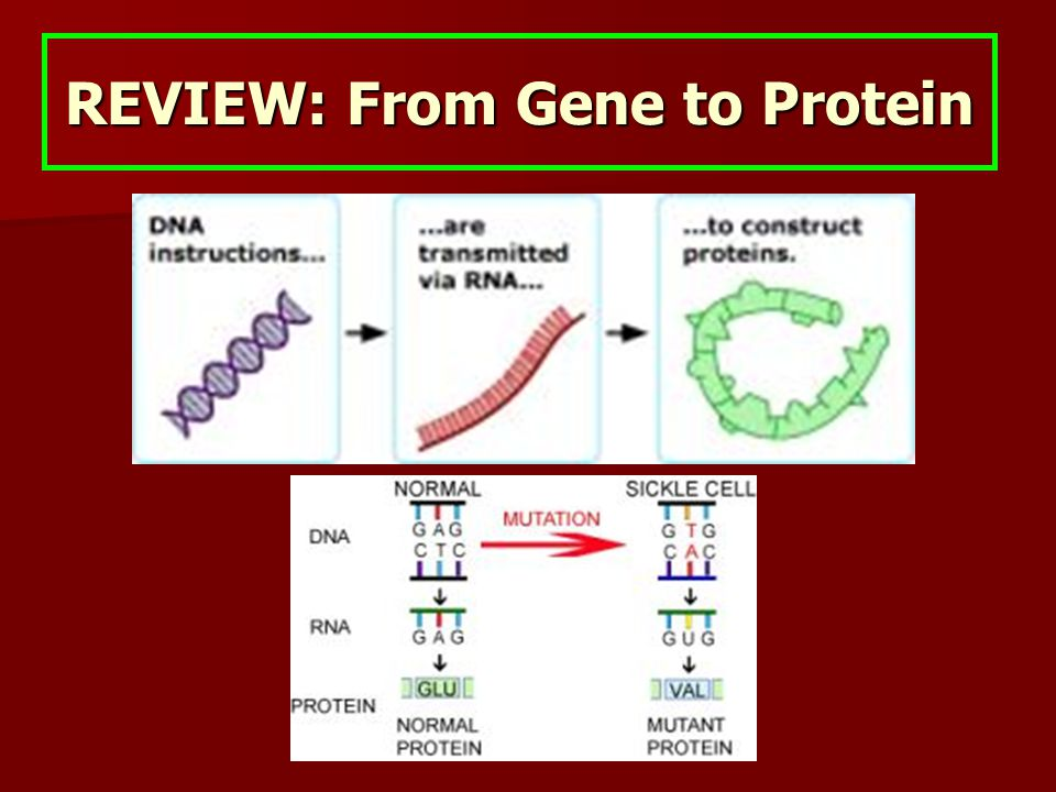 REVIEW: From Gene to Protein