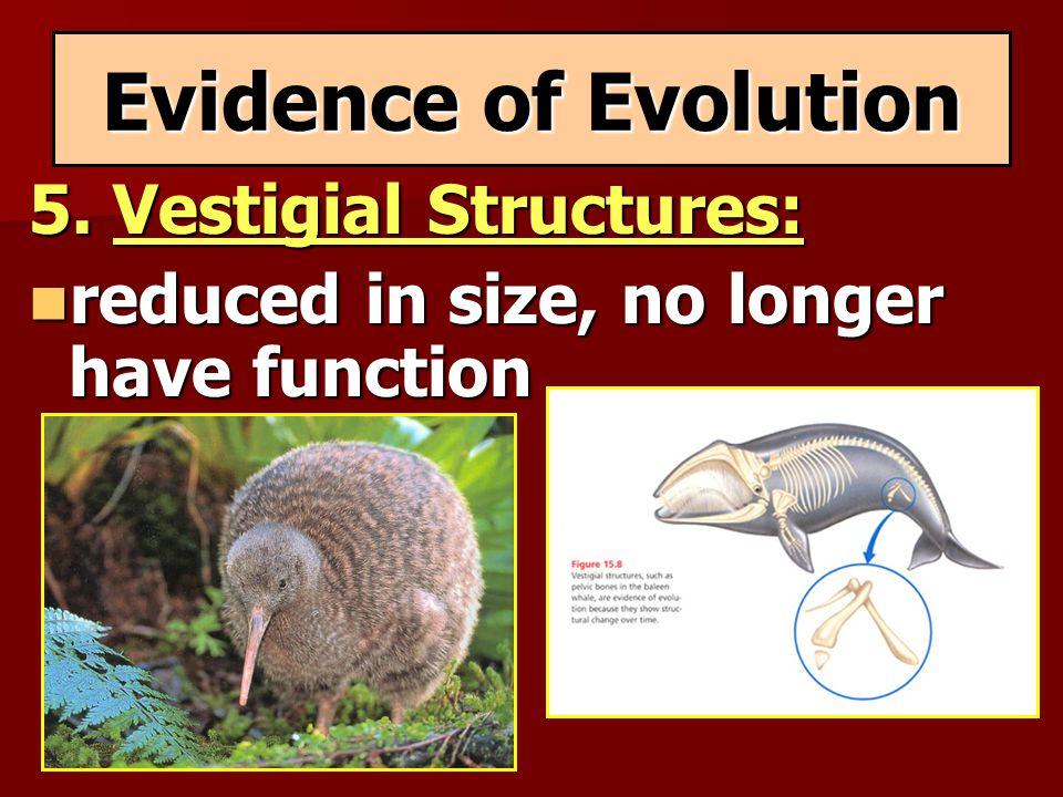 Evidence of Evolution 5. Vestigial Structures: