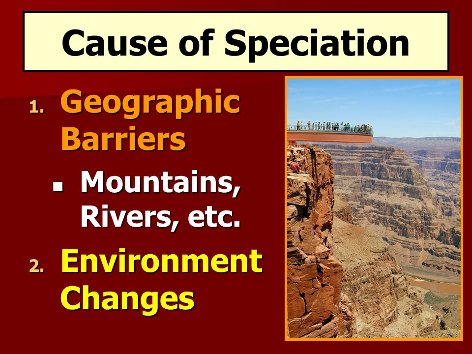 Cause of Speciation Geographic Barriers Environment Changes