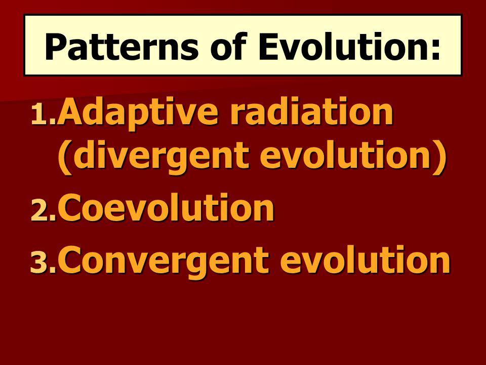 Patterns of Evolution: