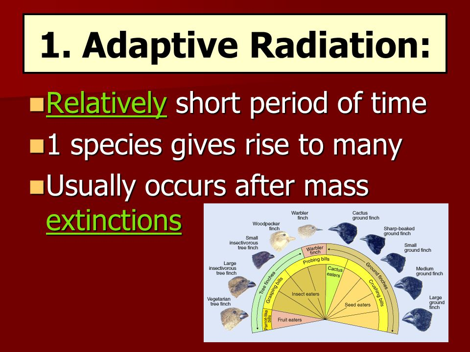 1. Adaptive Radiation: Relatively short period of time