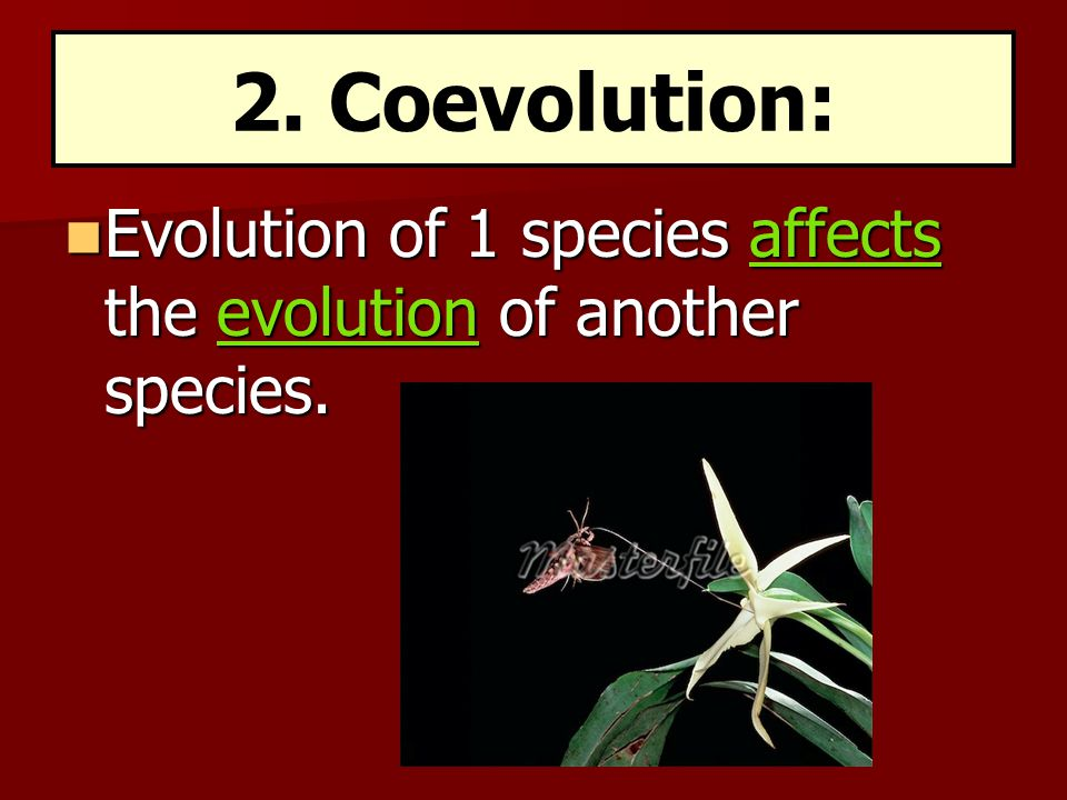 2. Coevolution: Evolution of 1 species affects the evolution of another species.