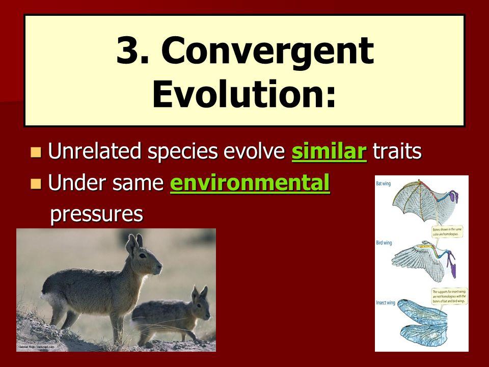 3. Convergent Evolution: