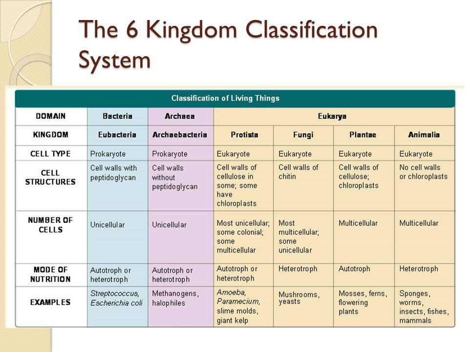The 6 Kingdom Classification System
